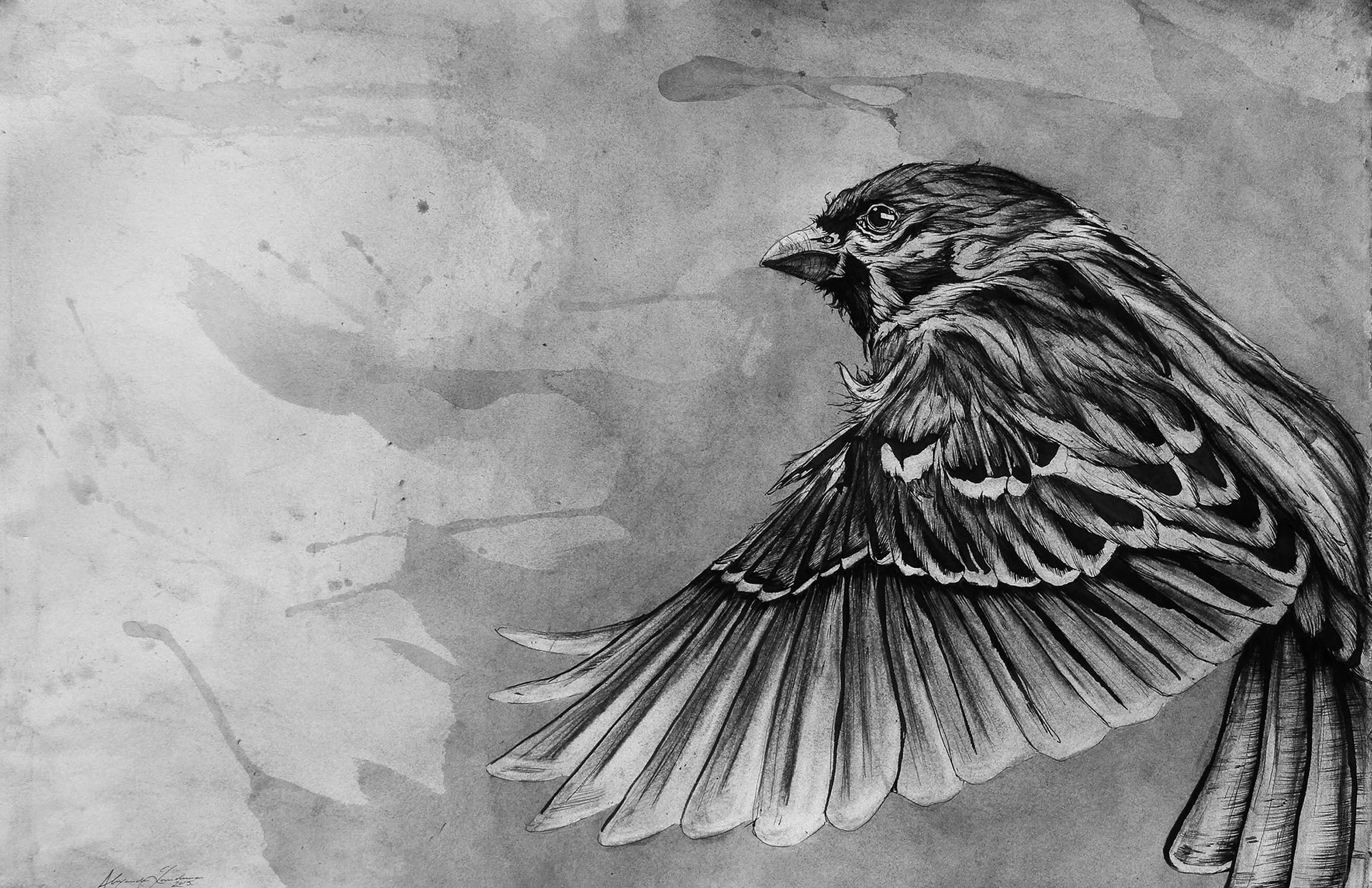 Sparrow - Wisconsin